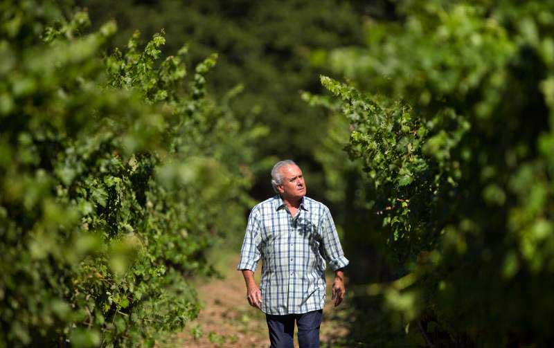 Bruce Cohn debuts new wine label, 3 years after loss of namesake winery